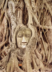 fear thoughts are like strangling vines